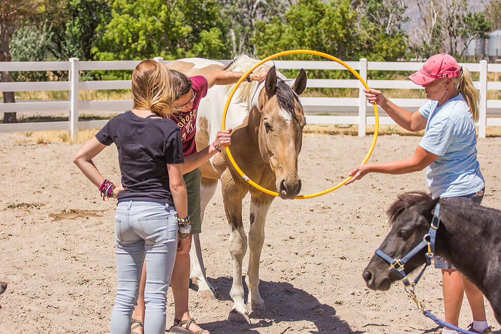 A group of New Haven Students doing a task with a horse during equine therapy