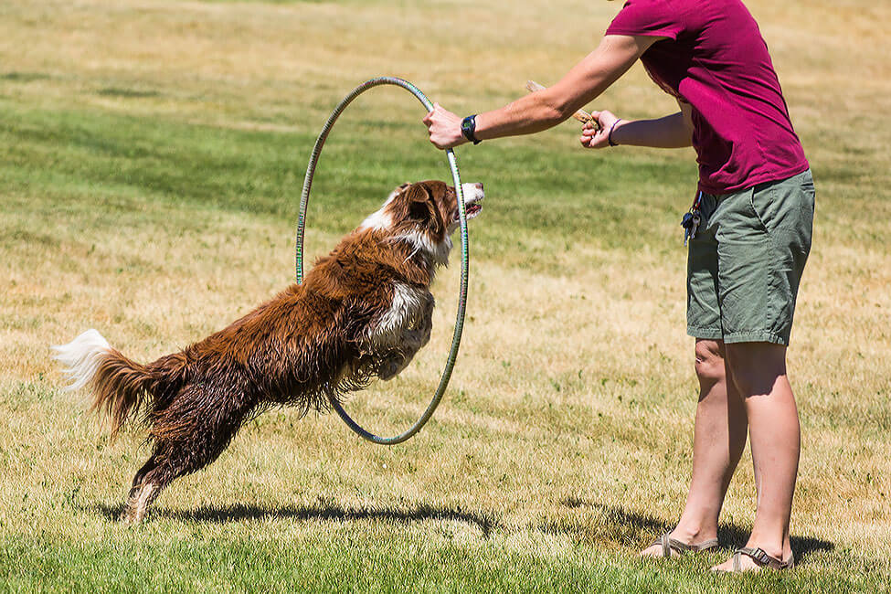 A dog jumping through a hula hoop at New Haven Residential Treatment Center