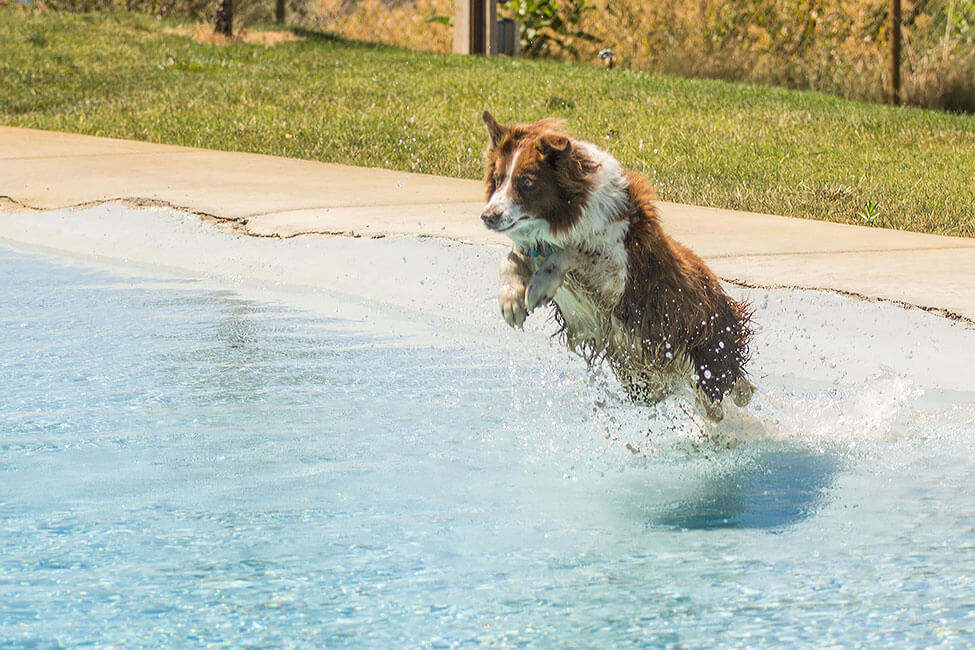 A dog jumping across the pool at New Haven Residential Treatment Center