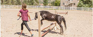 Equine Therapy provides and alternative to talk therapy for teenage girls in a treatment center
